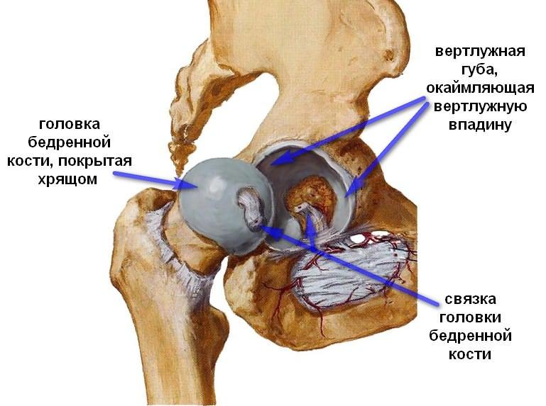Endoprotezarea/artroplastia articulației șoldului